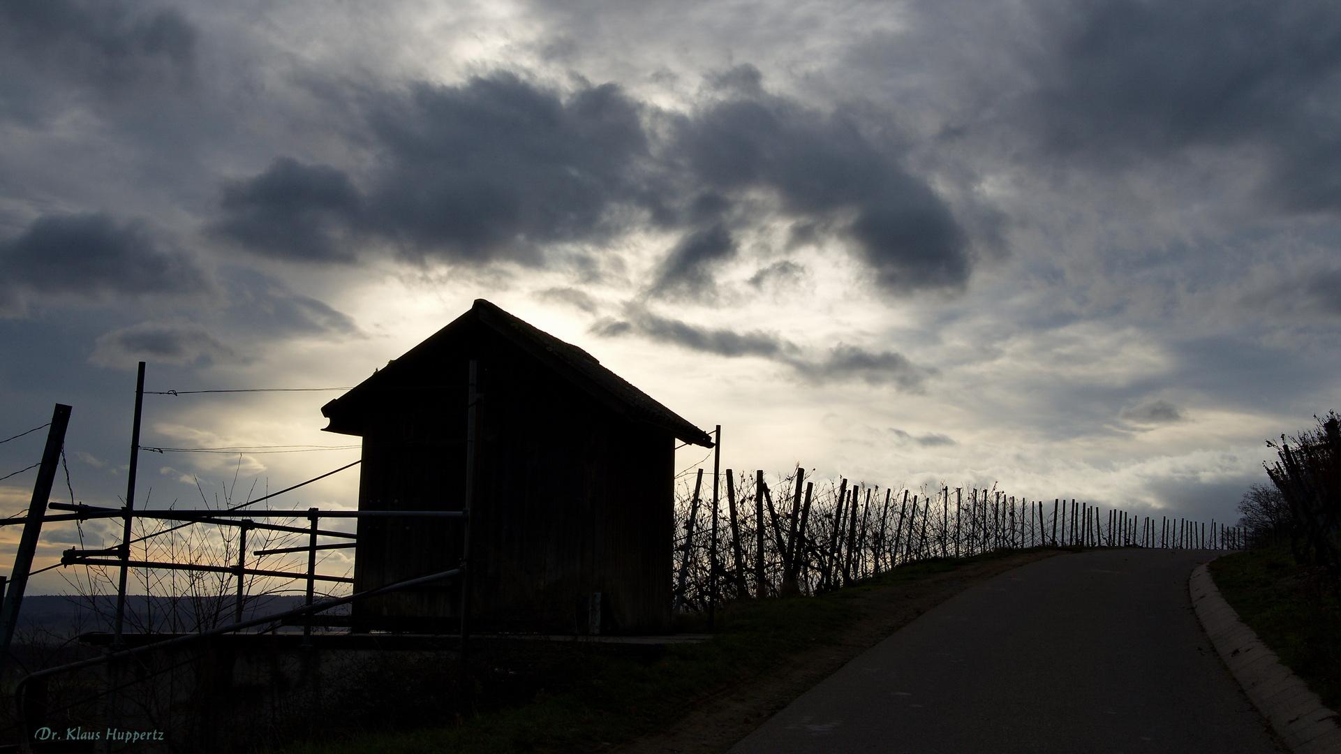 Spaziergang im Weinberg (1)