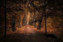 Spaziergang in den Herbst