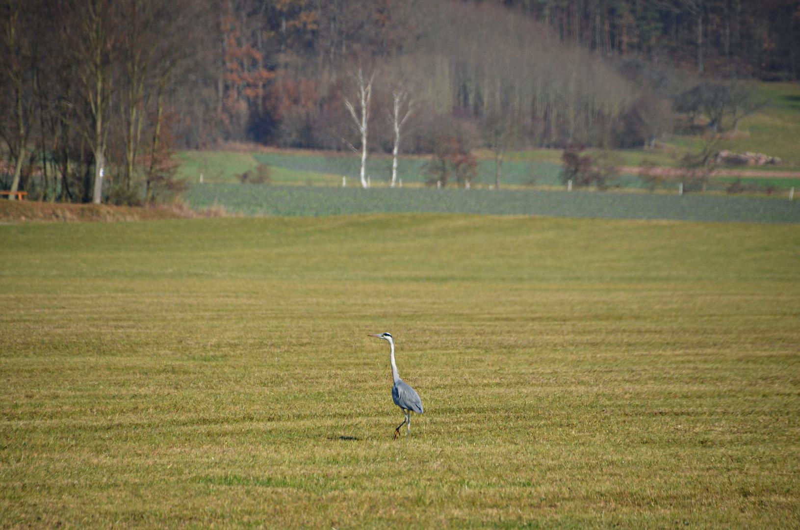 Spaziergang in die Saalewiese
