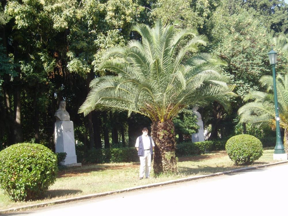 Spaziergang unter Palmen