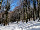 Spaziergang zum Feldberg im Taunus