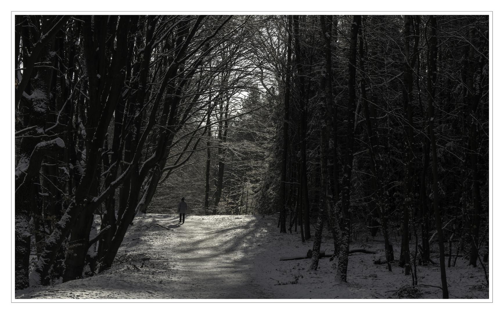 Spazierwald