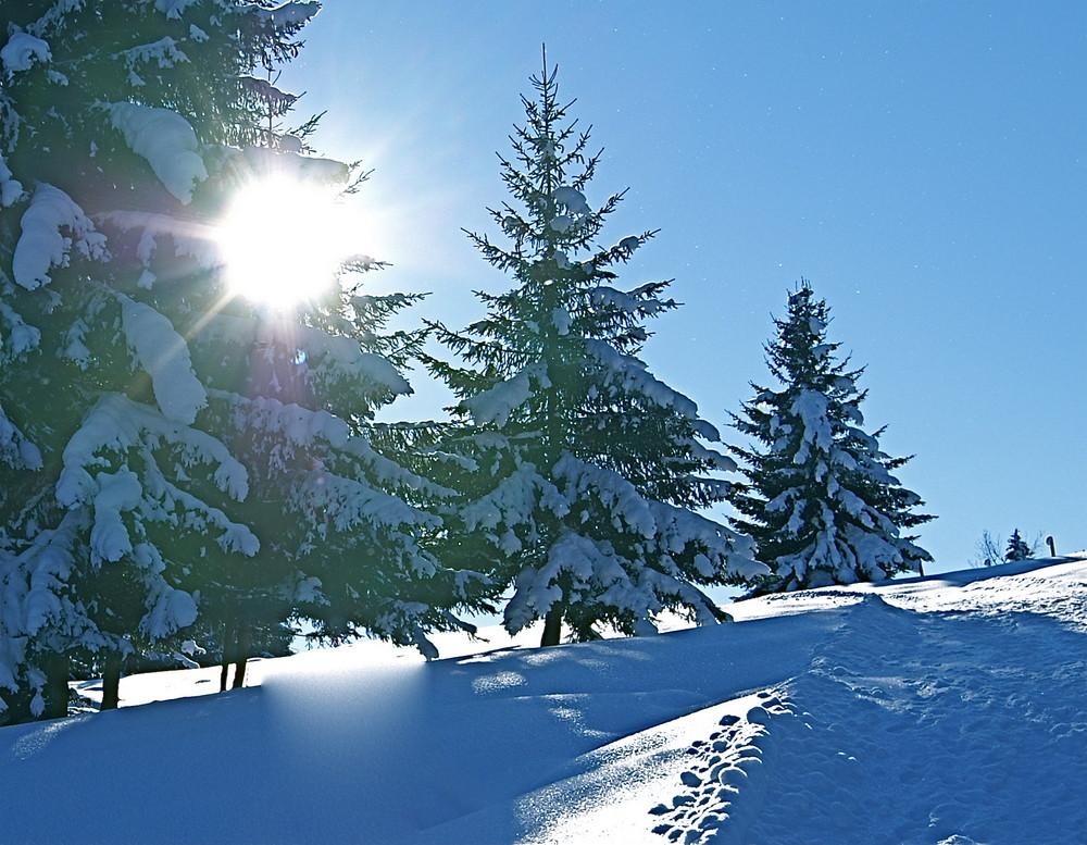 Spazierweg im Winterkleid