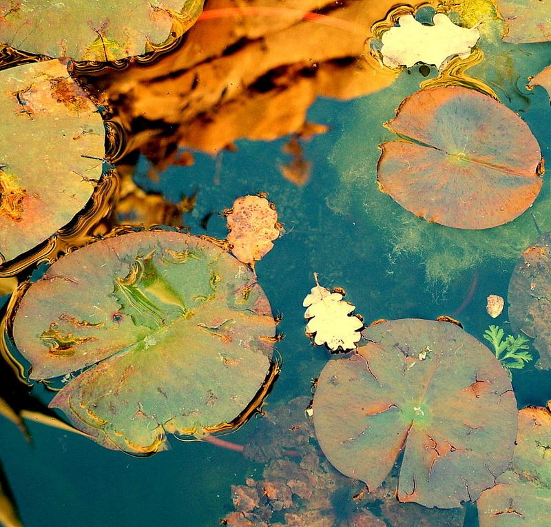 Specchio d'acqua impressionista