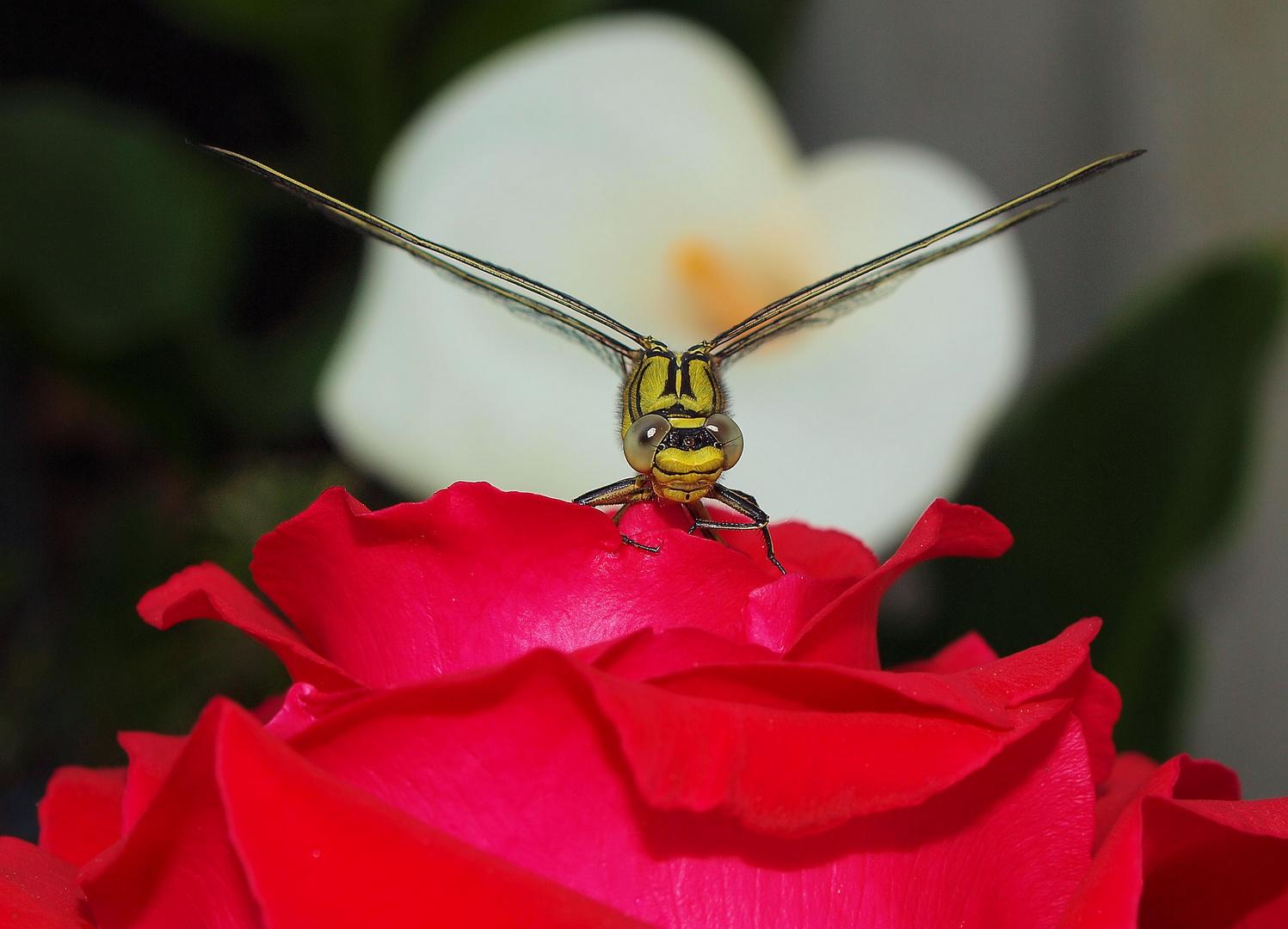 special libellules http://neo85746.skyrock.com/