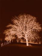 Spectrum Tree