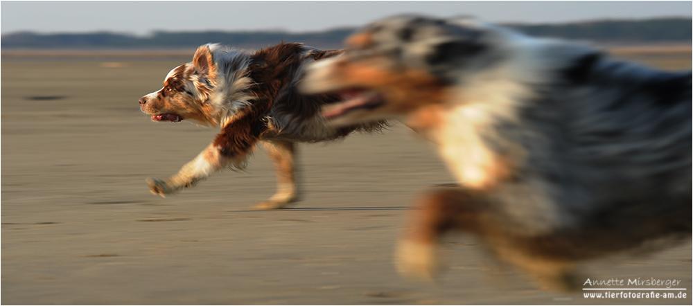 ***Speed***