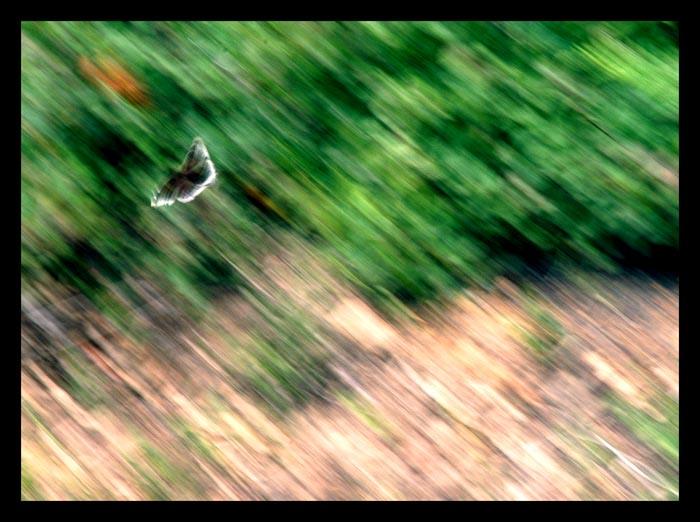 Speed...