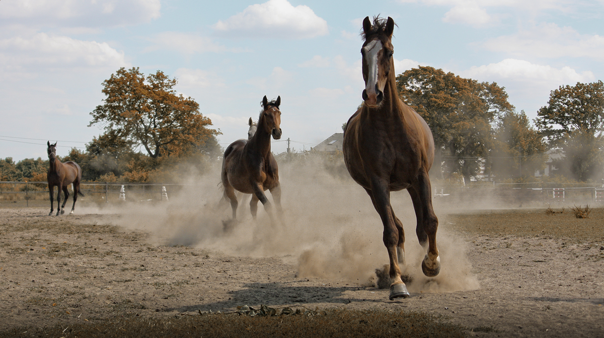 speed II