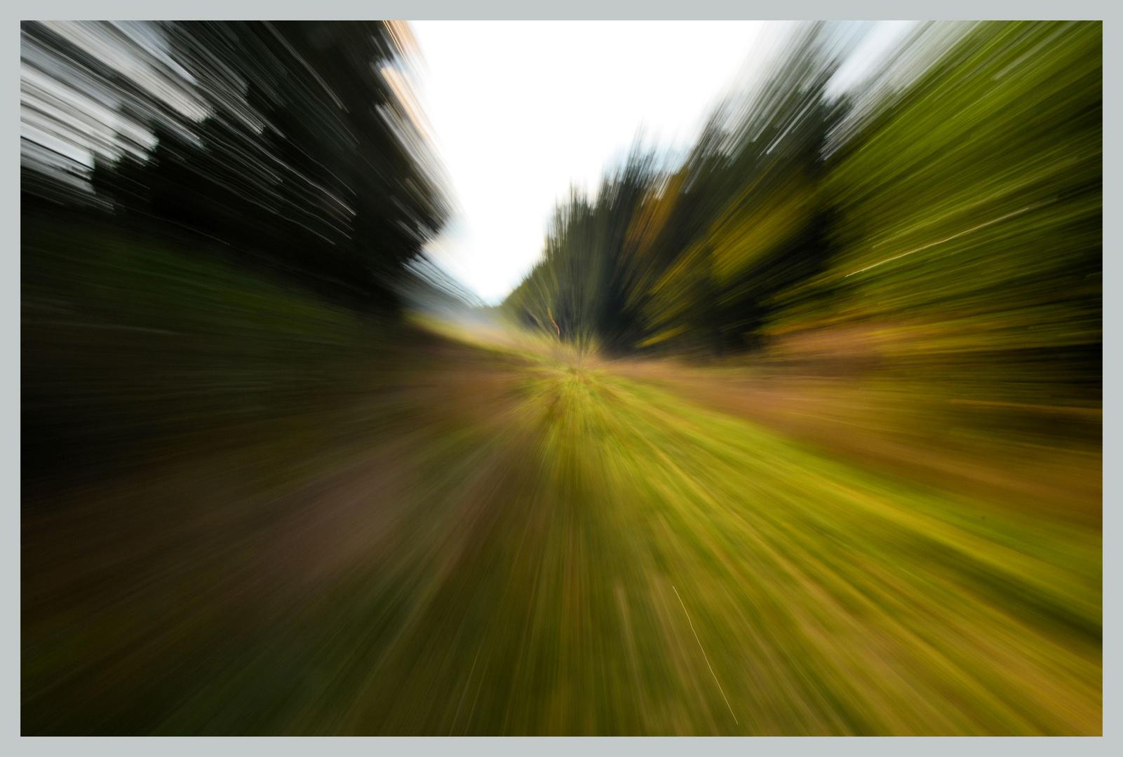 Speed im Wald 1