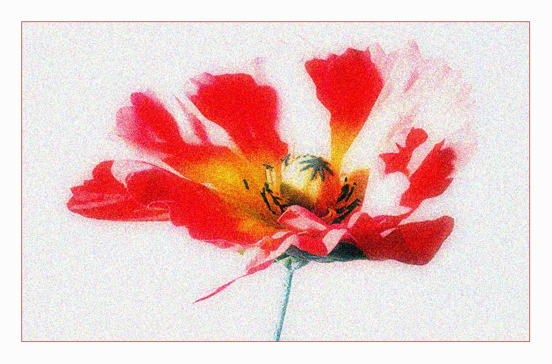 Speedlight on the Mohnflower