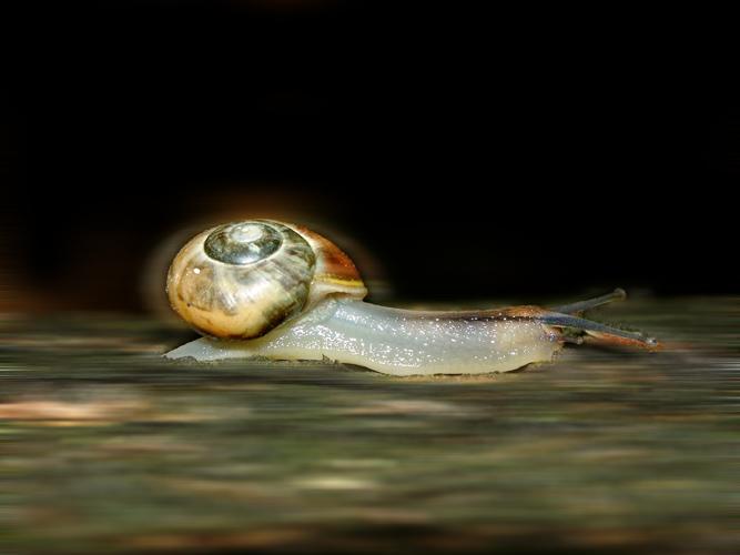 Speedsnail