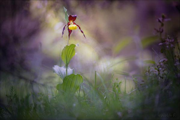 Spektakulär oder doch nur eine Schönheit in der Pflanzenwelt