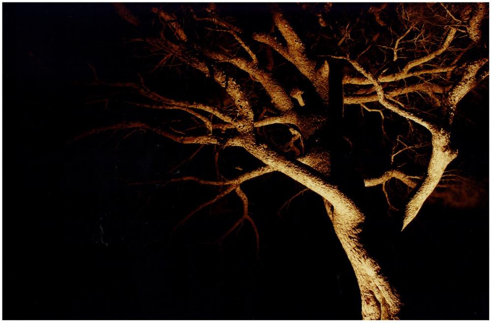spettro d'albero