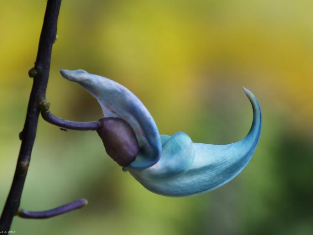 Spezielle Orchidee