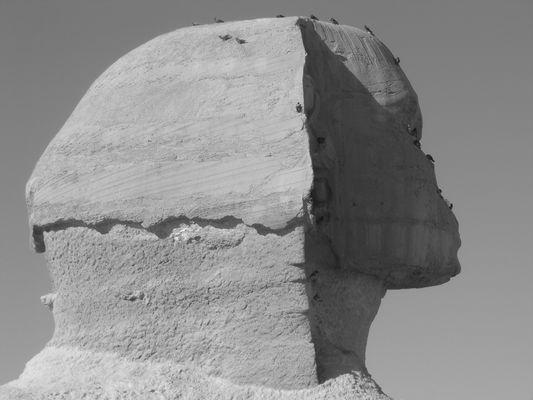 Sphinx - mit Tauben im Gesicht