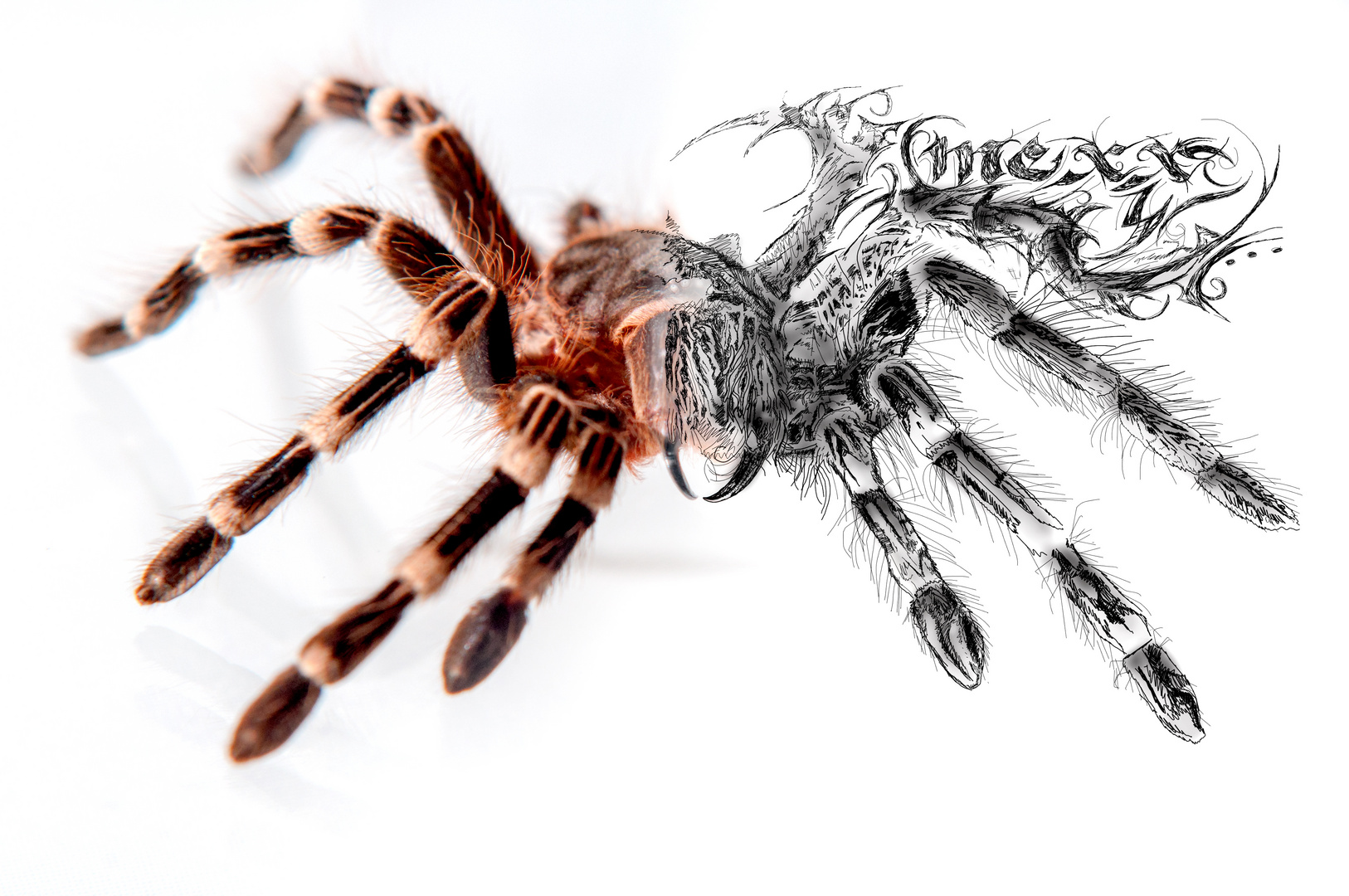 spider 1st try