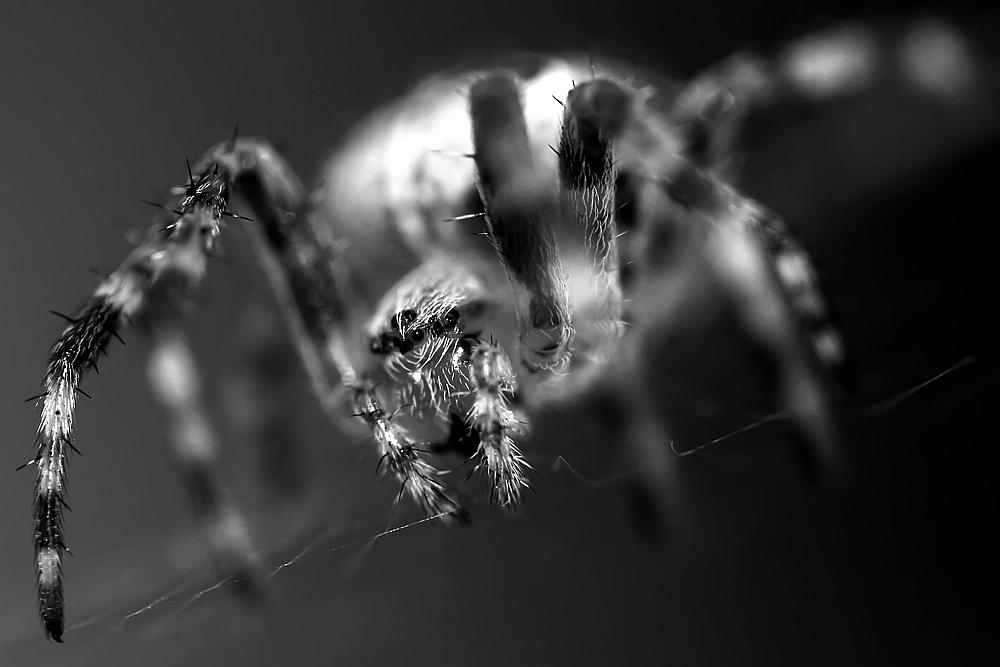 *Spider*