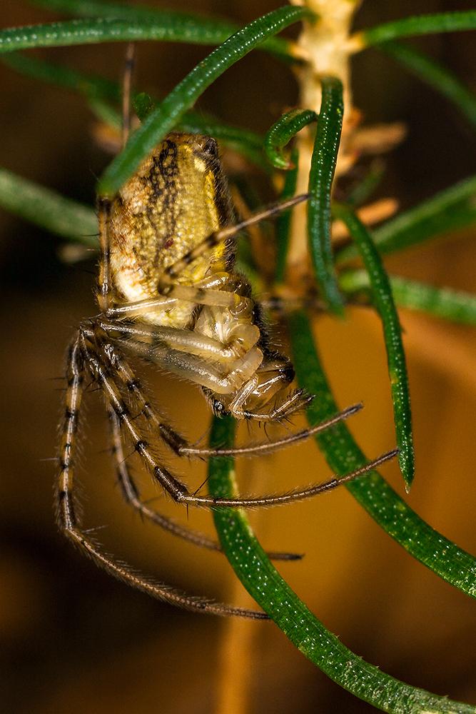 ~Spider~