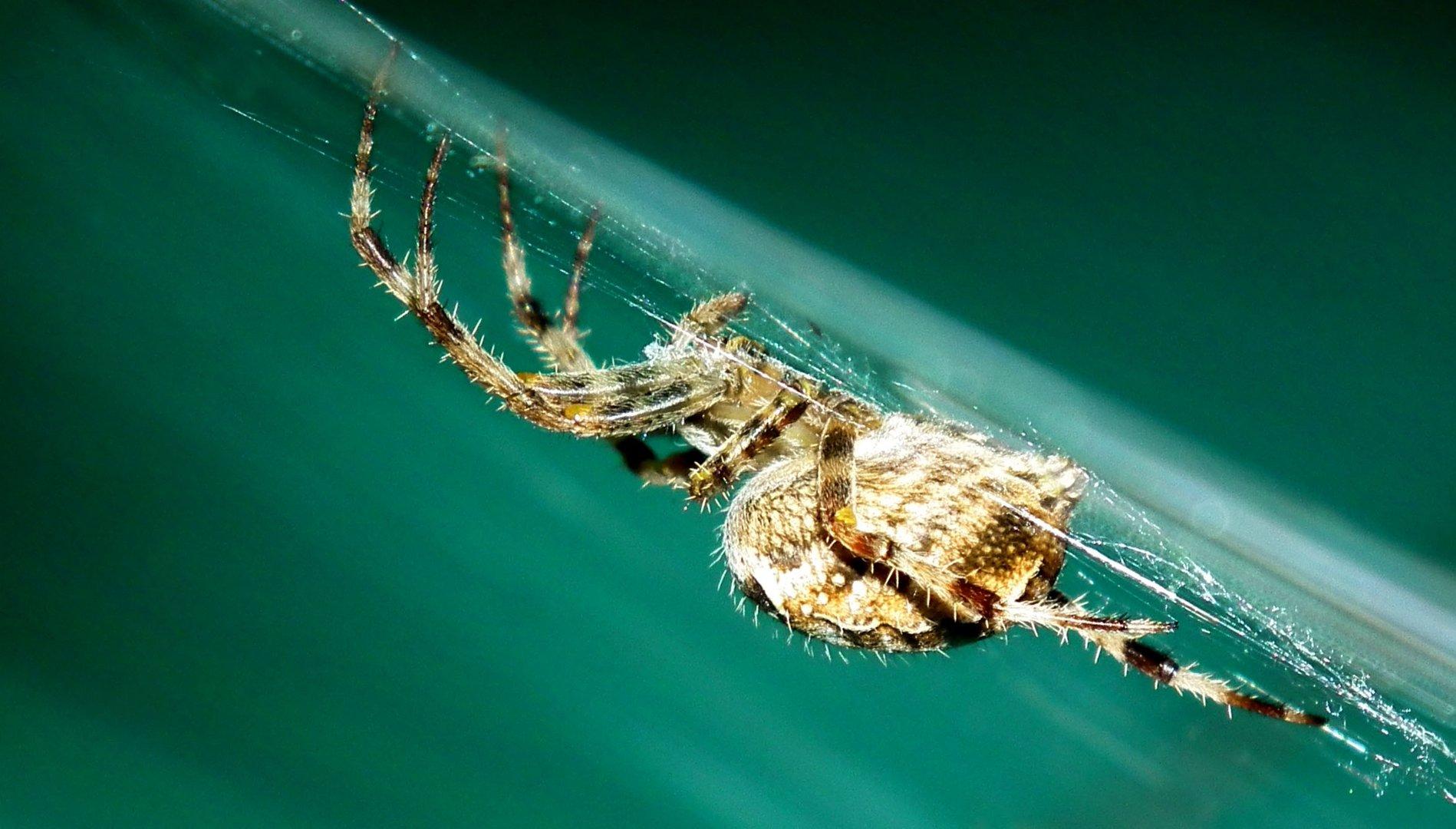~ spider ~