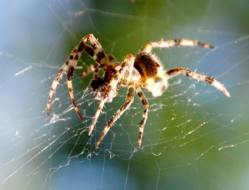 spider at day