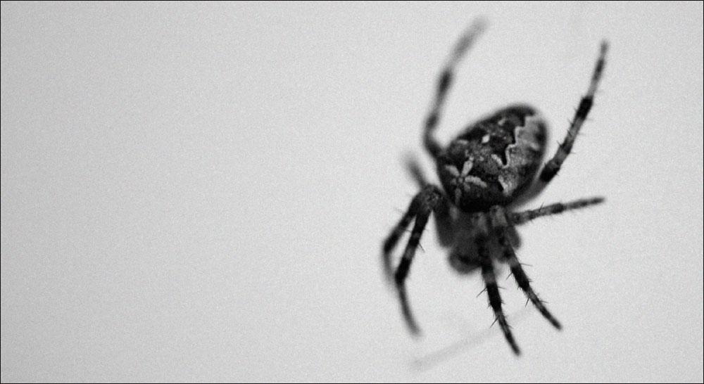 *** Spider ***