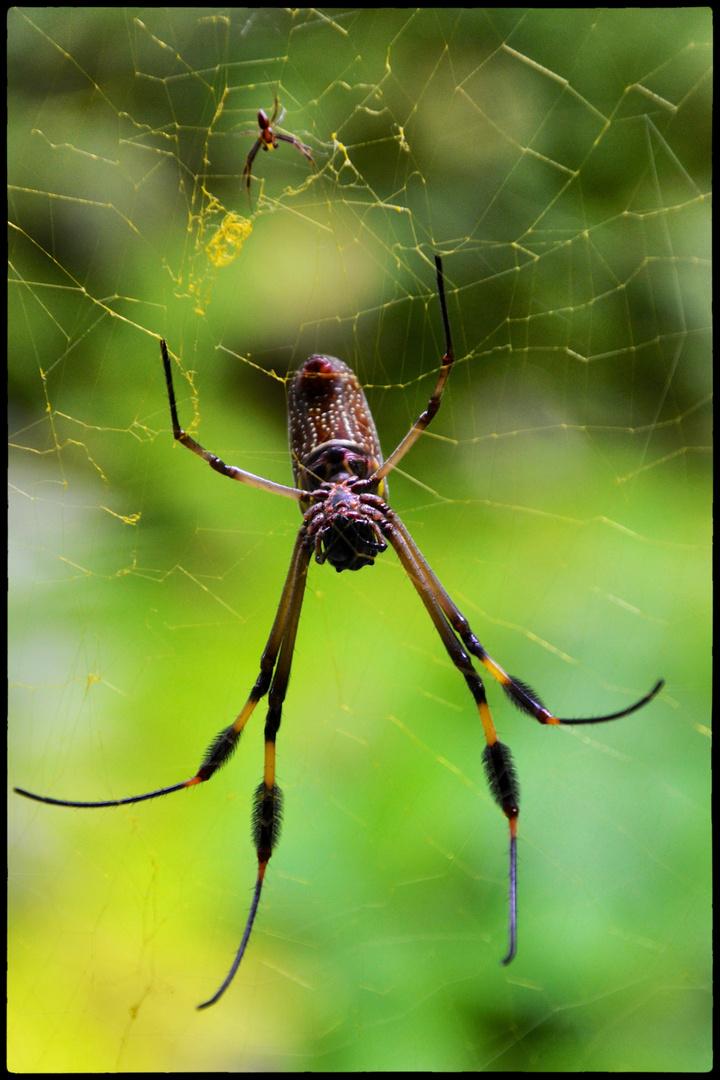Spider & baby spider