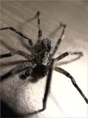 Spider Desk by K.R