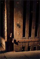 Spider - Dream Weaver