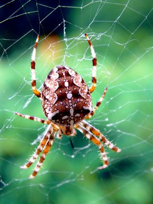 Spider in the green