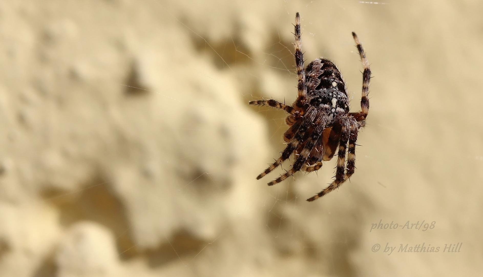 Spider-Macro