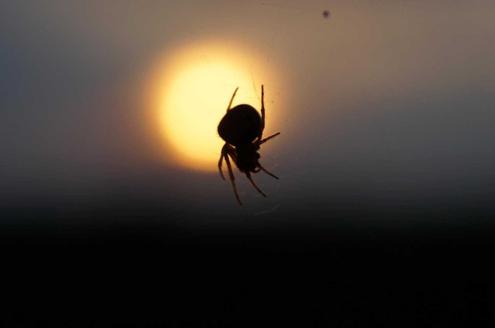 Spider meets Sunshine