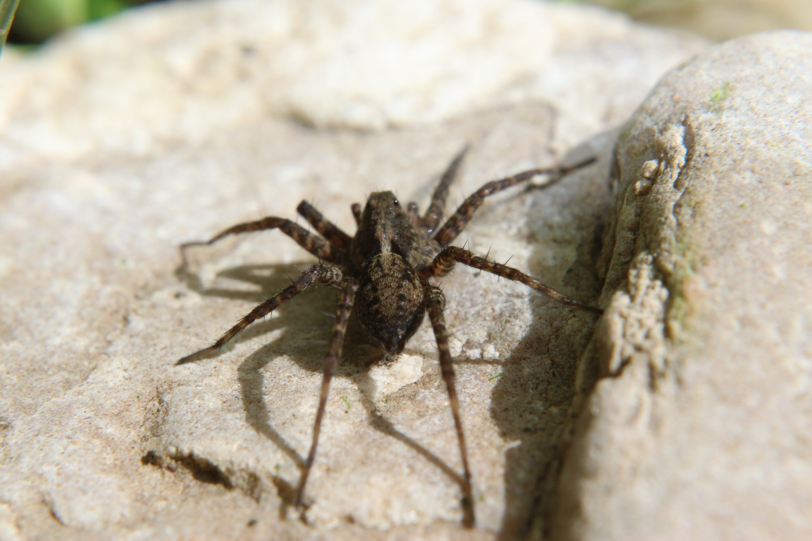 Spider on Tour erwischt......