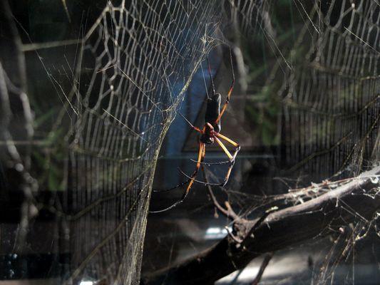 Spider on Web 2.0