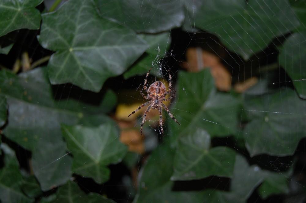 Spider Simon...gg