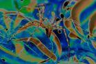 """""""Spider Solaris"""""""