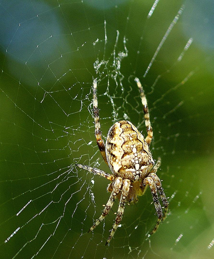 """""""Spider"""" tisse sa toile!!!!!!"""