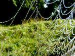 *spider web*