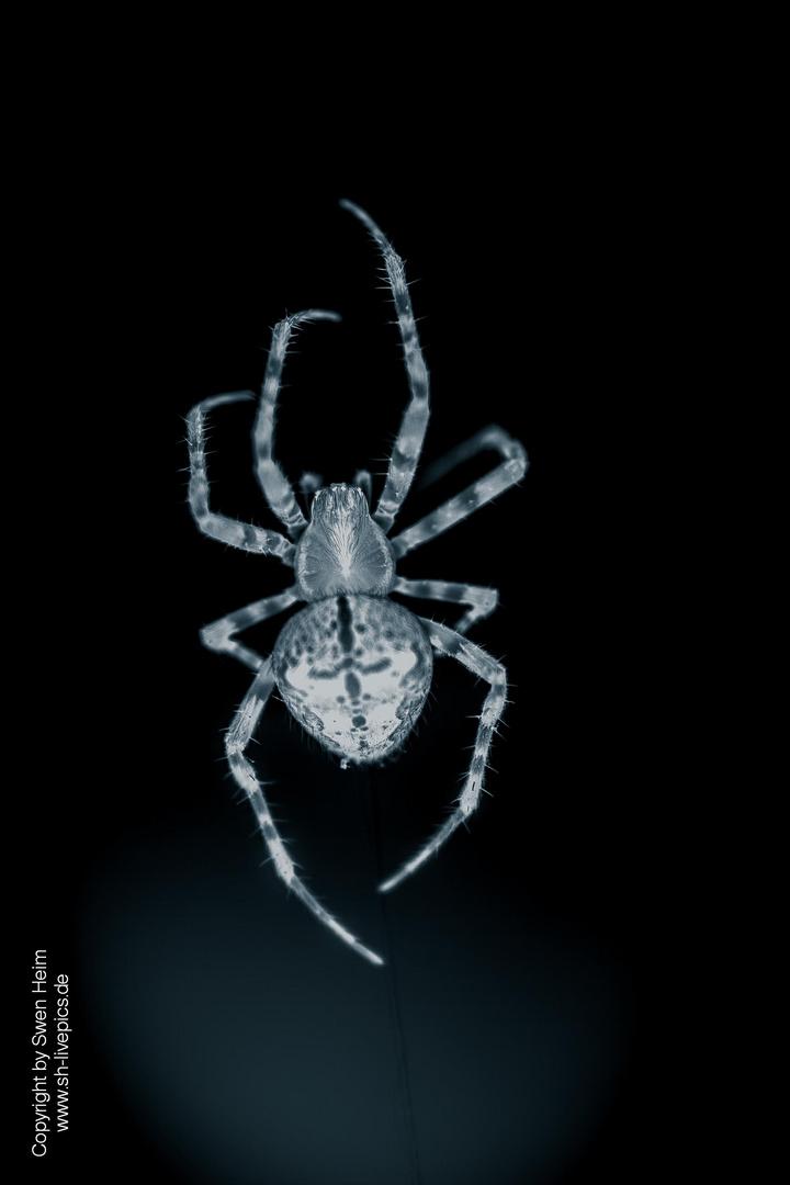 Spider @ Work ...