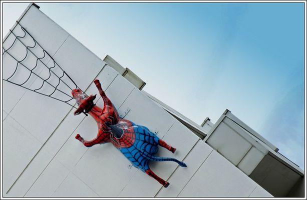 Spider...C O W!