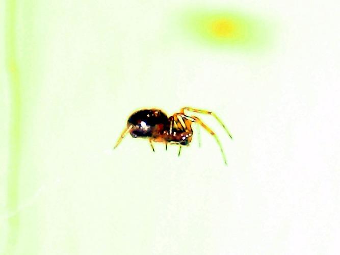 Spider(man) ;)