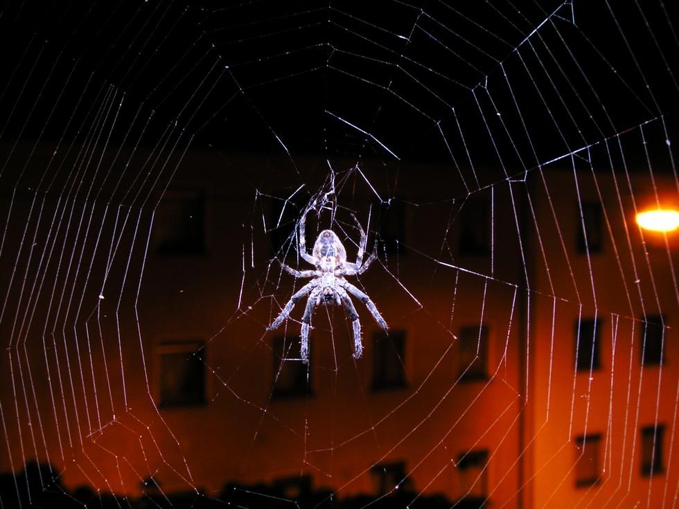 Spiderman 4 ...