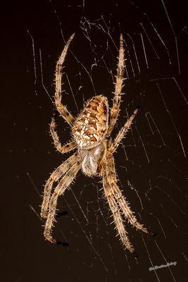 Spiderman ;-)