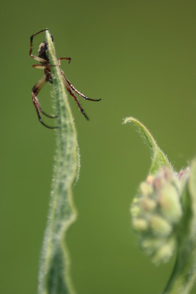 spiderman en mission