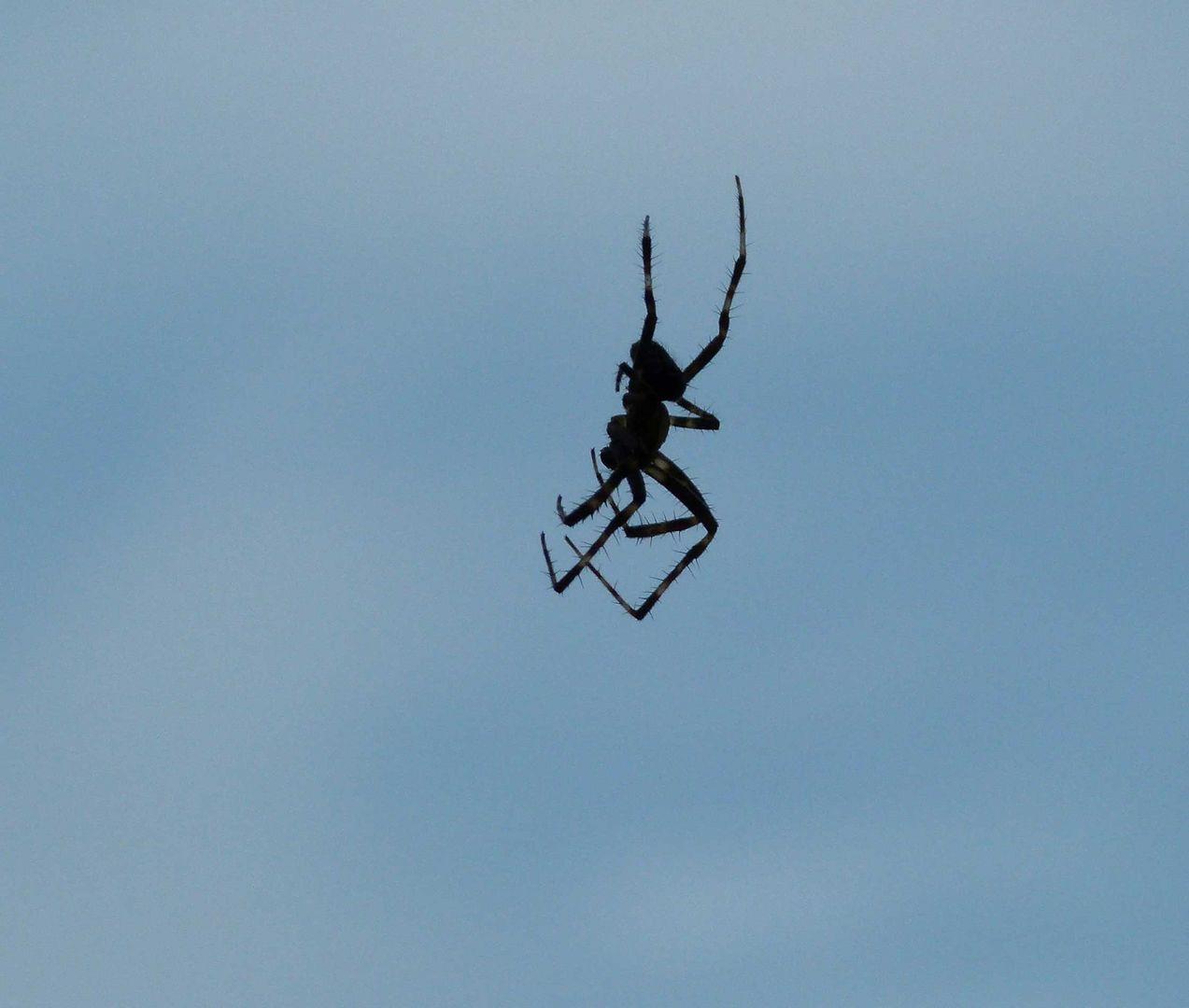 Spiderman im freien Flug