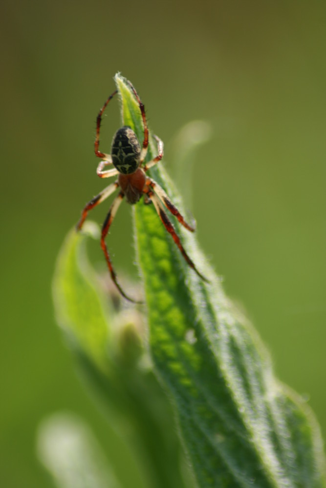 spiderman toujours en mission impossible