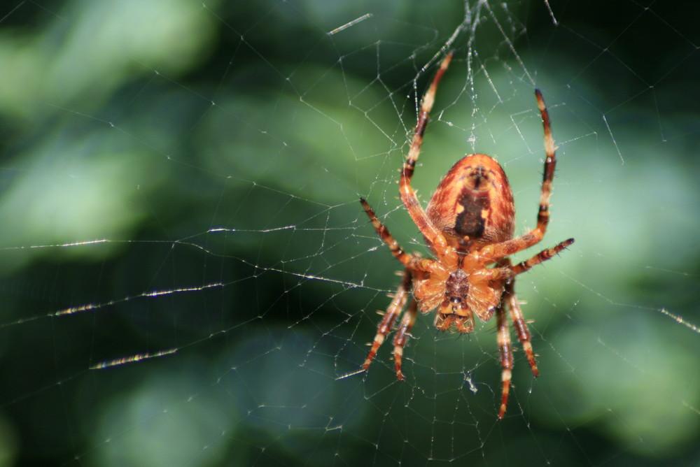 Spider's Web.