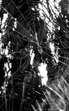 Spiderweb... blk and white