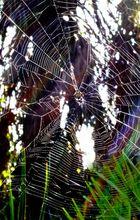 Spiderweb... color
