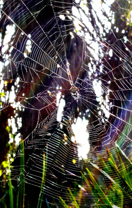 Spiderweb- color; edited more